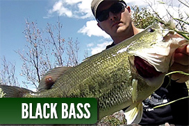 Galeria de fotos de Black Bass